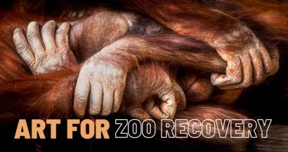 Art for Zoo Recovery