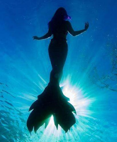 Mermaids at the Aquarium